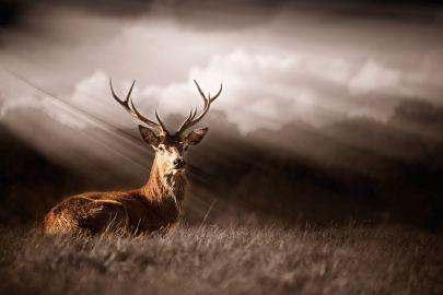 Cuadro ciervo bosque de tela y madera