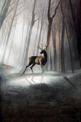 Cuadro ciervo sombras