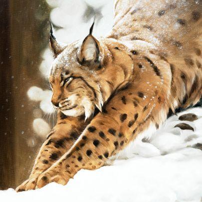cuadro lince en la nieve