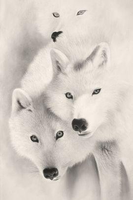 lienzo de lobos blancos